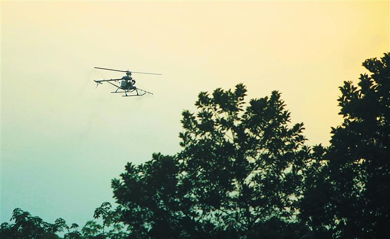 中国热科院试验无人机高空喷药防治橡胶树炭疽病