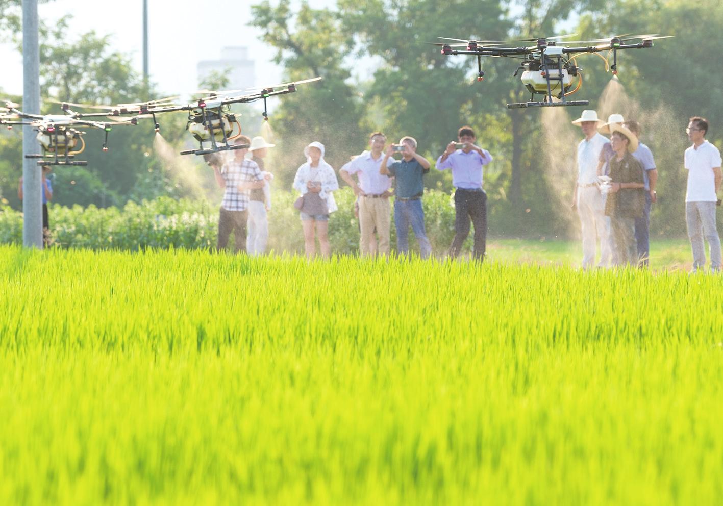 潜山市植保无人机防治水稻病虫害